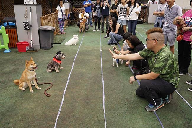 於8月19日,港灣豪庭廣場更會舉辦狗狗指令比賽,歡迎一眾愛犬人士帶同愛寵參與!
