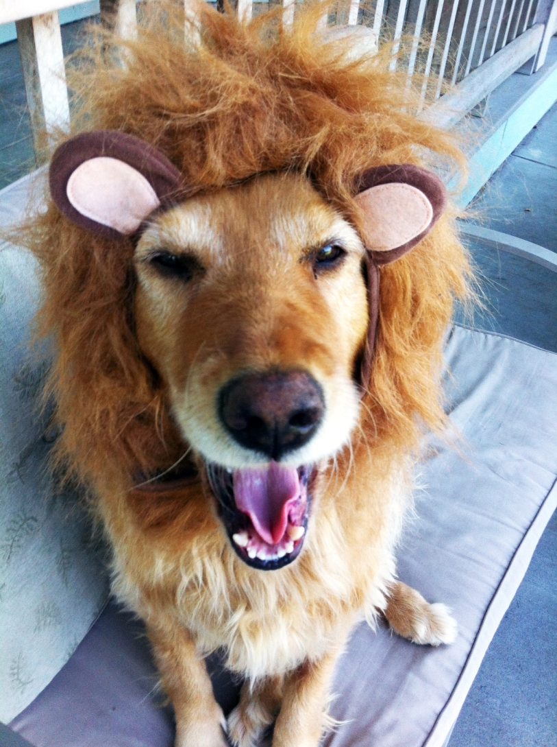 獅子王狗狗