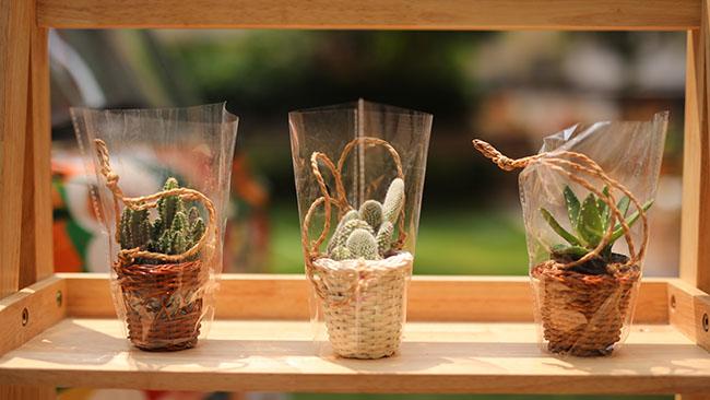 「匡智會」綠色環保義賣多肉植物盆栽