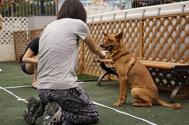 一眾愛犬人士與狗狗並肩作戰,發揮完美默契!