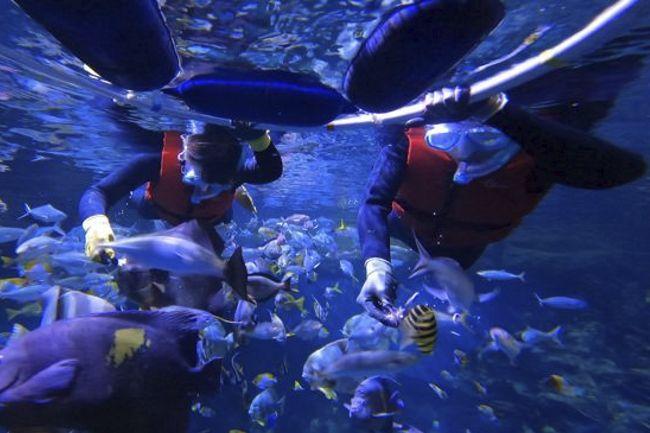 一樣的海洋.不一樣的體驗海洋公園夏日限定體驗
